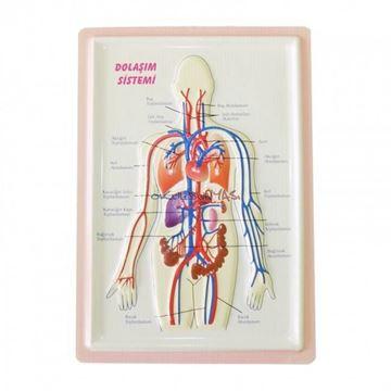 A4 Kabartma anatomi levhası 9 lu set resmi